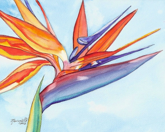 Bird of Paradise art, Bird of Paradise print, Tropical flower print, Hawaiian art, Hawaiian flowers, Kauai art, Paradise art, aloha flower