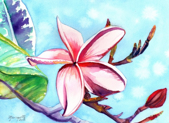 Plumeria Flower, Plumeria Watercolor, Plumeria Art, Tropical Flower, Frangipani Art, Kauai Art, Hawaiian Painting, Made in Hawaii, Maui Oahu
