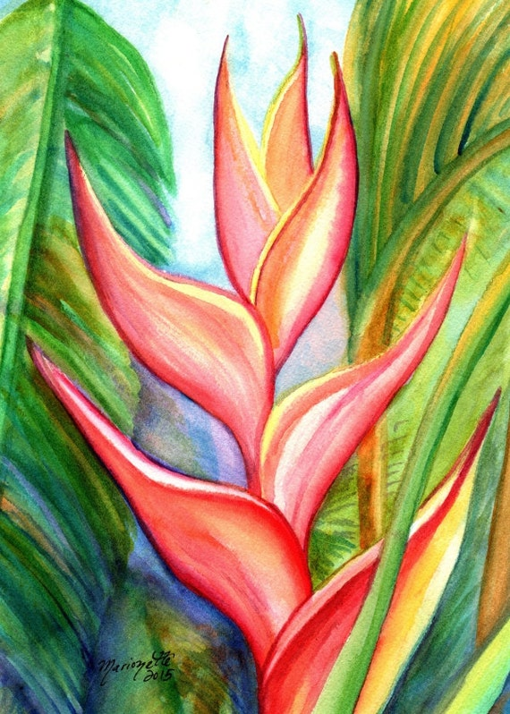 Pink Heliconia art print from Kauai Hawaii hot pink orange exotic flower coral Tropical Flower Art Kauai Fine Art Hawaiian Wall Decor