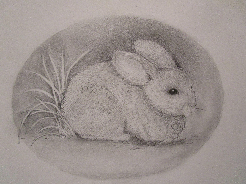 Rabbit Pencil Drawing Print Etsy