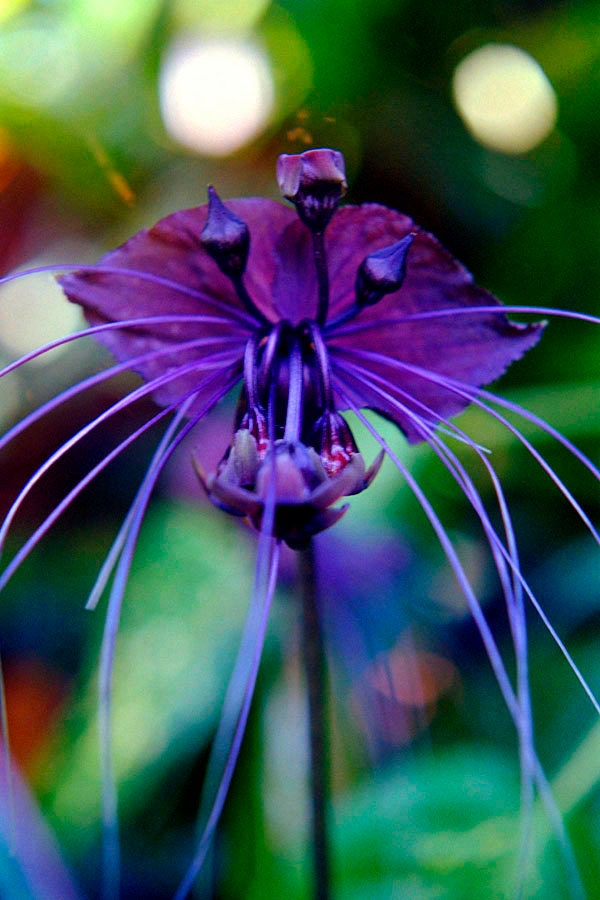 black bat flower fine art photo greeting card exotic  etsy