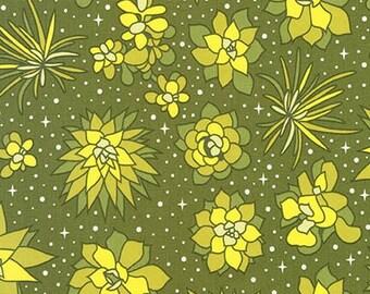 Terrarium (17279-371) Wasabi Space Plants by Elizabeth Hartman