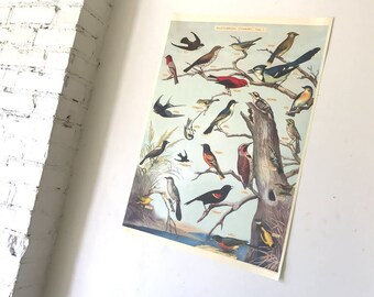 Vintage Style Audubon Bird Guide Chart Decorative Wrap and Craft Paper by Cavallini