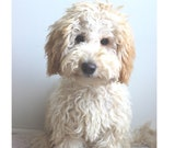 FABRIC LABRADOODLE DOG ( Blond) Puppy. One 16 inch square panel to sew or quilt.Actual picture is approx 8 x 10 quot on white background.