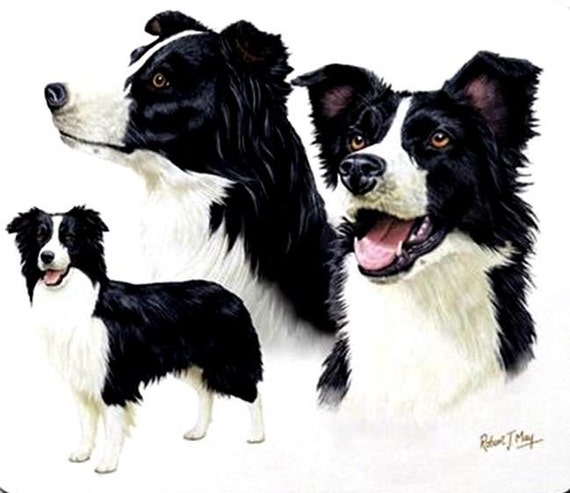 """BORDER COLLIE 3 DOGs on ONE 16 inch Fabric Panel to Sew Actual pic is 8/""""x10/""""."""