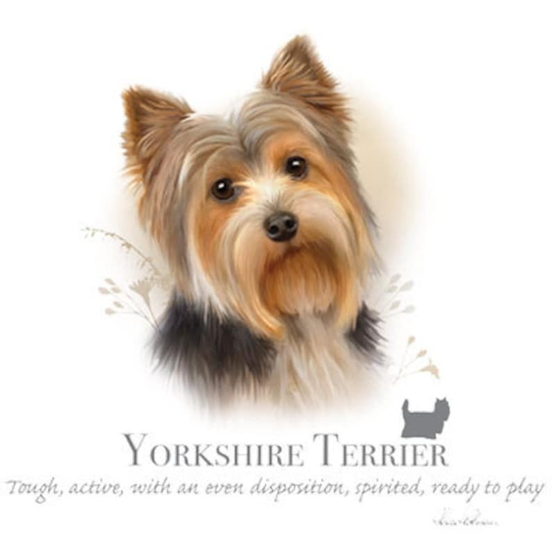 YORKSHIRE TERRIER Yorkie dog with Phrase on One image 0
