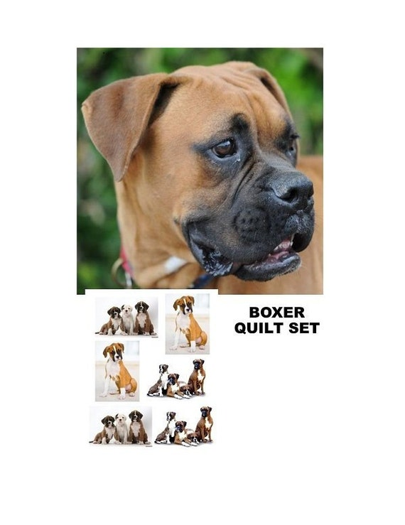 """Uncropped BOXER Dogs Family on One 16 inch Panel toSew.Actual Pic is 8/"""" x 11/"""""""