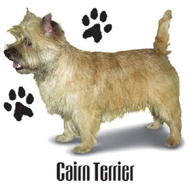 CAIRN TERRIER Dog with Paws on ONE 18