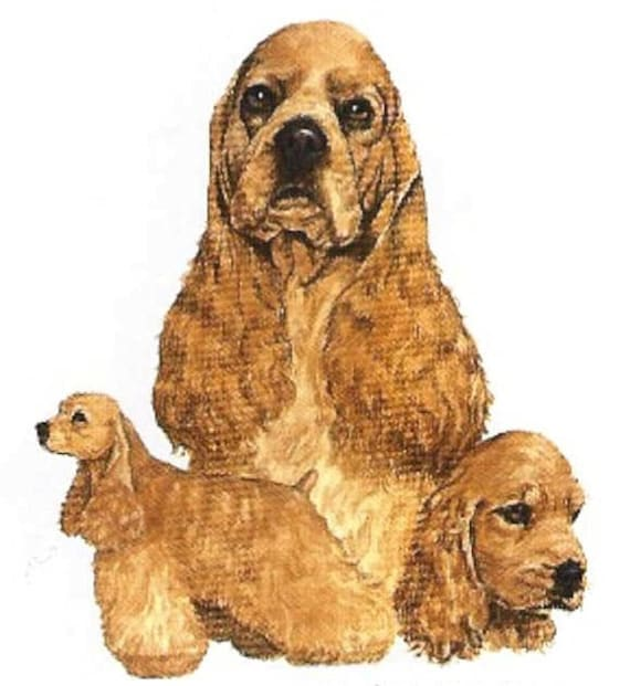 Cocker Spaniel Buff Color Multi Dogs Twelve Identical 6 Etsy