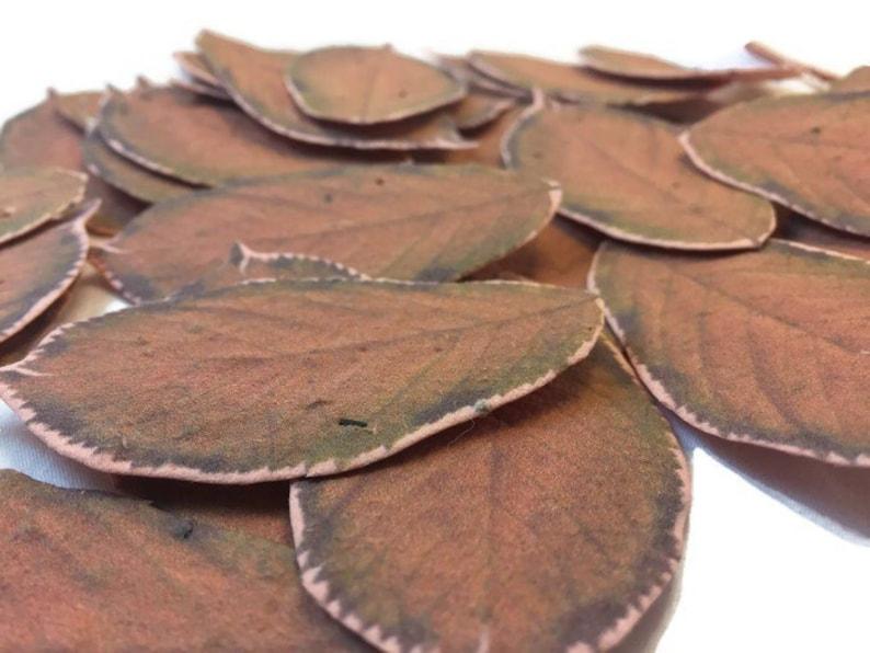 OrangeBrown Wildlfower Seeded Orange Fall Leaves 50 count