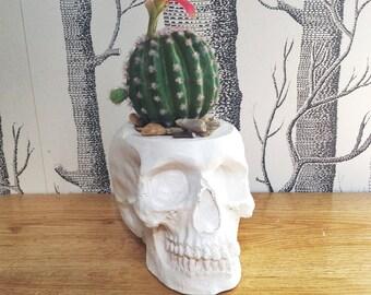 Large Skull Cactus Pot, Succulent Planter, Plant Pot | Human Skull useful pen desk tidy