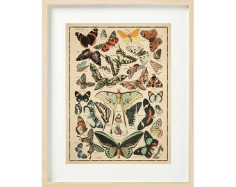 16x20 Quality Decorative Poster print.French Adolphe Millot Nature illustration.Butterflies.9661