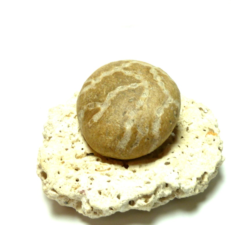 Beach Stone Pebble Rare Fossil Chain Coral Large River Rock Ancient Speciman Undrilled Collector/'s Find Natural HOT CROSS BUN