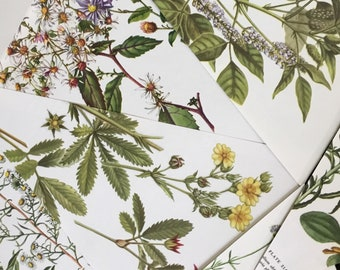 50 DIY Vintage Wild Flower Botanical Prints Bunting Garland Set of Book Page Botanicals Cut & Ready Do it Yourself Wedding Birthday Party