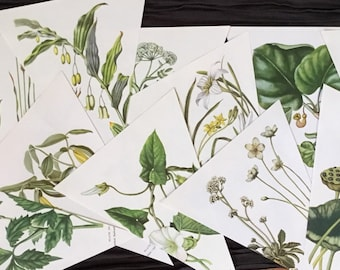 12 Yellows Wild Flower Vintage Botanical Prints Bunting Garland Book Page pre Cut & Ready to Do it Yourself Wedding Birthday Decor