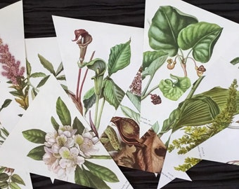 12 DIY Vintage Wild Plant and Flower Botanical Prints Bunting Garland Set Book Page pre Cut & Ready to Do it Yourself Wedding Birthday Decor