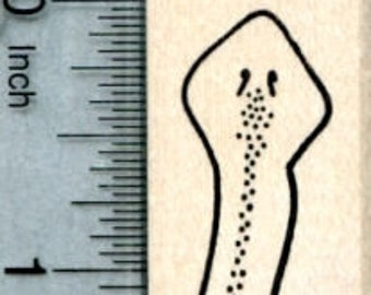 Planarian Rubber Stamp, Flatworm, Biology Series D33103 Wood Mounted