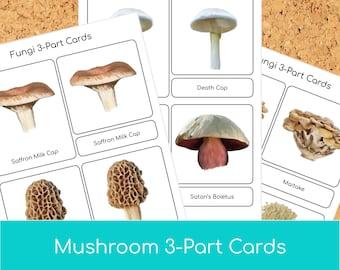 Montessori Mushroom 3 part cards