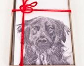 Jake: Shelter Dog Series ...