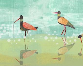 Wading Birds (11x14)