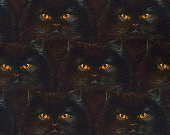 BLACK CAT Fabric - Robert Kaufman Fabric - Whiskers and Tails Black - Orange Eyes