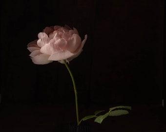 2020 - Botanical No. 0557