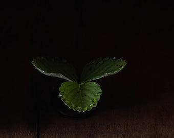 2020 - Botanical No. 0549