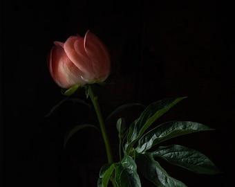 2020 - Botanical No. 0550