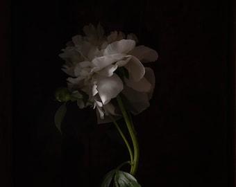 2020 - Botanical No. 0542