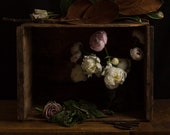 Dark Botanical studio No. 004