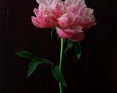dark botanical_no_3