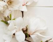 light botanical_no_12