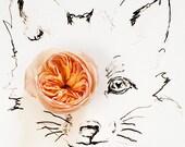 fox_no_6