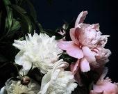dark botanical_no_21