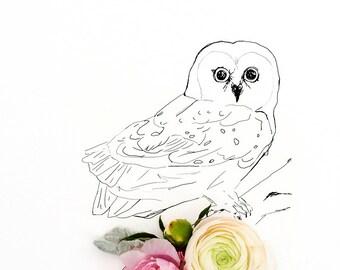 owl_no_2