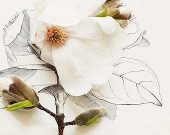 flora_no_2
