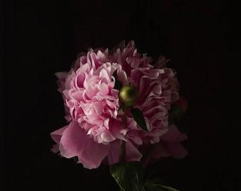 2020 - Botanical No. 0551