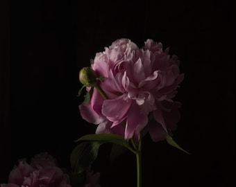 2020 - Botanical No. 0554