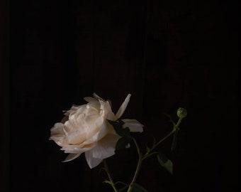 2020 - Botanical No. 0553