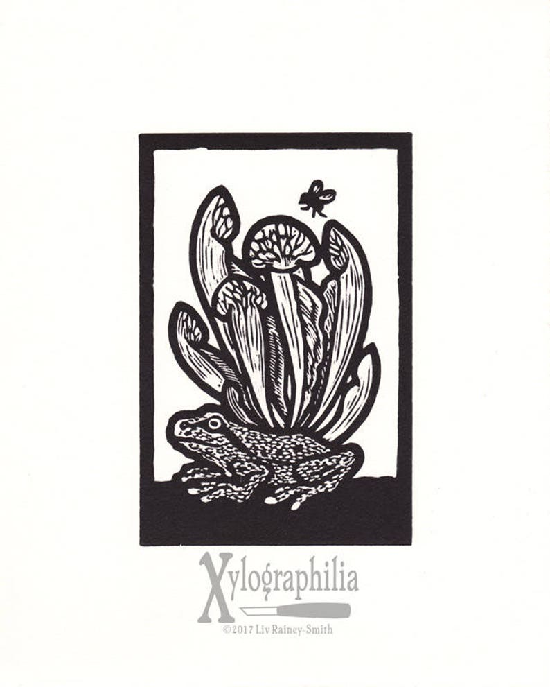 Insectivores Pacific Tree Frog and Pitcher Plant woodcut print image 0