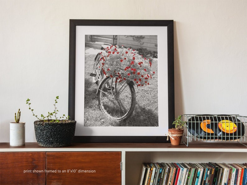 Old Bicycle and Red Flowers Photo Print Black and White image 0