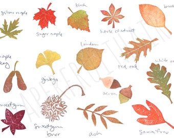 north american tree leaf collection - hand carved stamp