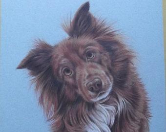 Custom Portrait Of Your Pet In Coloured Pencil