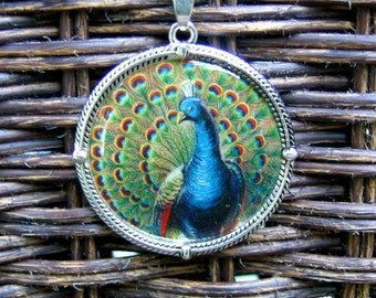 Colorful Peacock Pendant on Light Curb Chain