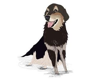 Pet portrait DECEMBER