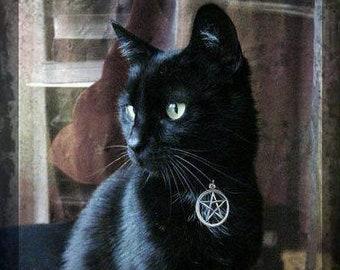 Witches Familiar Pentacle Cat Collar Adjustable in Black, Orange, Red, Blue & Purple