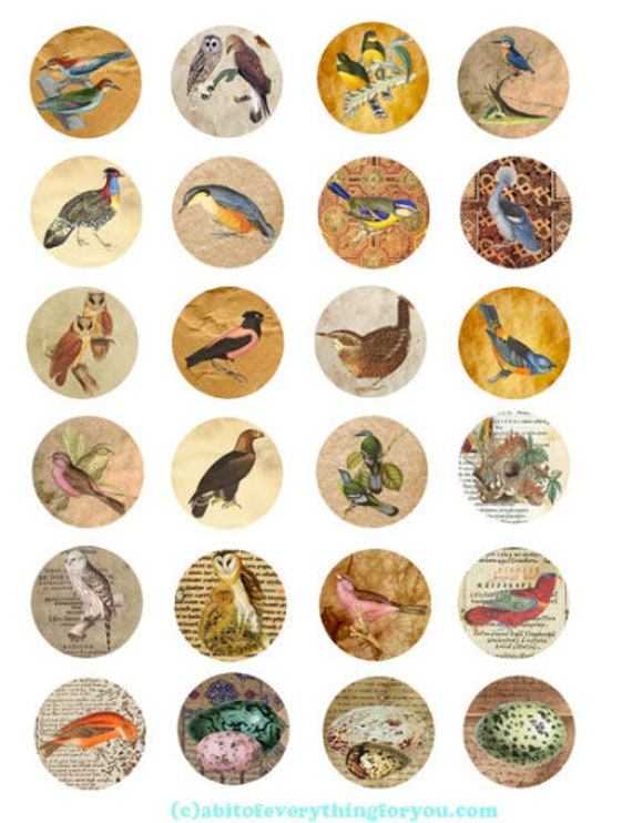 printable digital collage sheet antique paper birds eggs art clipart 1.5 inch circles animal nature images pendants diy jewelry making