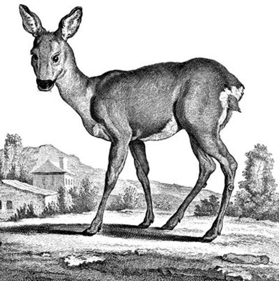 deer doe animal vintage illustration printable art clipart png download digital vintage image graphics black and white artwork downloadable