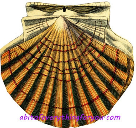 downloadable scallop sea shells ocean beach printable art print clipart png jpg instant download digital image graphics nautical