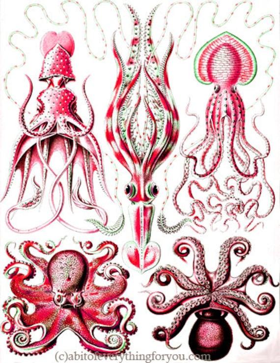 "red octopus squid sealife ocean animals art printable digital downloadable vintage image graphics nautical beach home decor 8.5"" x 11"""